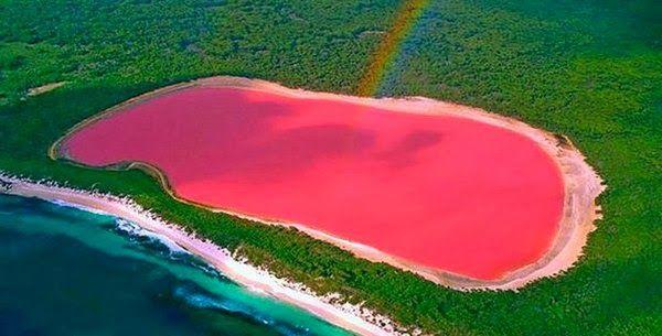 No es Photohop, es el lago rosa de Australia occidental conocido por lago Hillier. ¿Lo habías visto? #maravillasdelanaturaleza #lagohillier #lagorosa #pinklake #hillier #rosa #pink #fotosdelugares