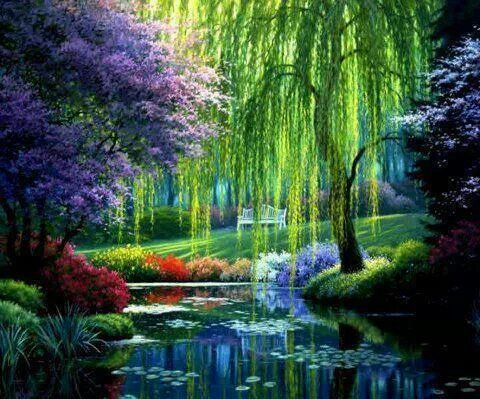 The magnificent weeping willow...