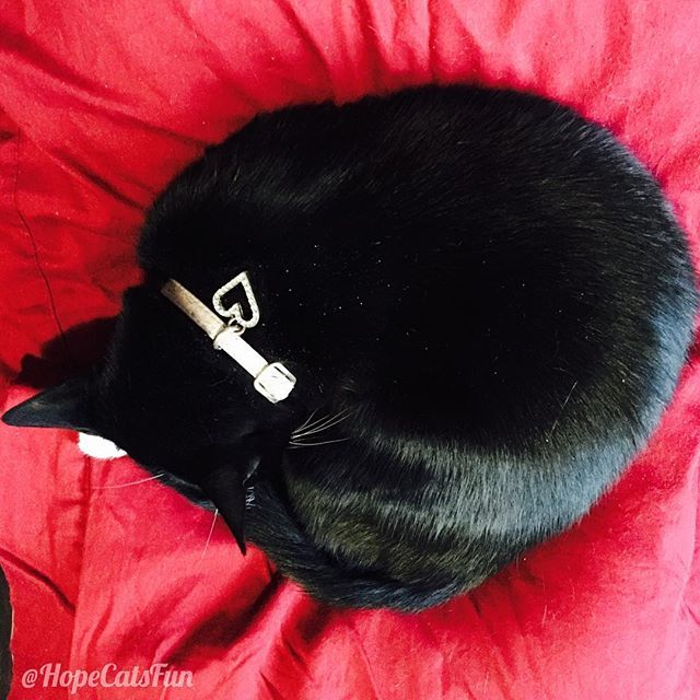 Bean bag cushion is still Mittens favourite sleeping spot of the day. #catsleeping #catoftheday #catsleepingpositions #blackcat #blackbeauty #theninjaprincess