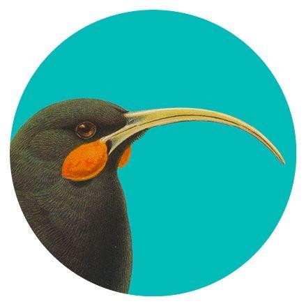 Art Spot Huia Cyan - NZ :