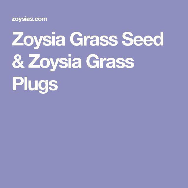 Zoysia Grass Seed & Zoysia Grass Plugs
