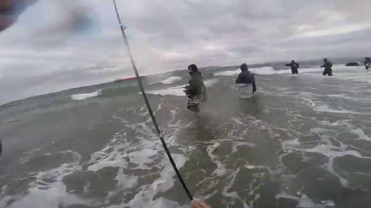 Lüfer Avı Çanakkale --- extreme saltwater bluefish