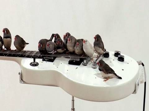 Rock 'n' Roll Birds