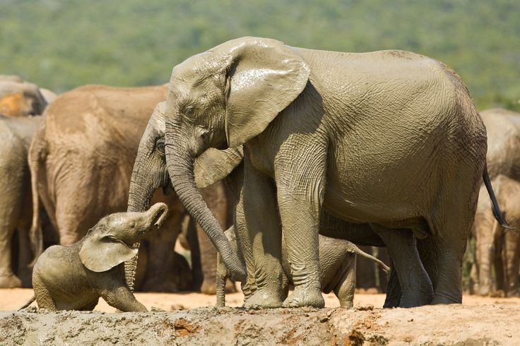 Mother Love - Addo Elephant National Park