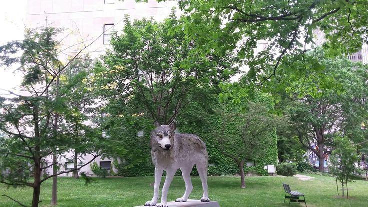 McGill Campus wolf