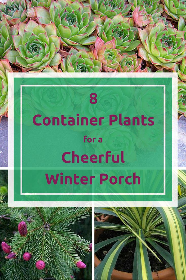 Liven Up Your Winter Porch with 8 Cold-Loving Plants ...