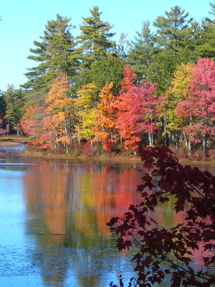 foliage in massachusetts - Bing Images