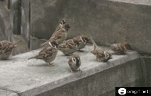 It's Okay...They're Birds - GIF