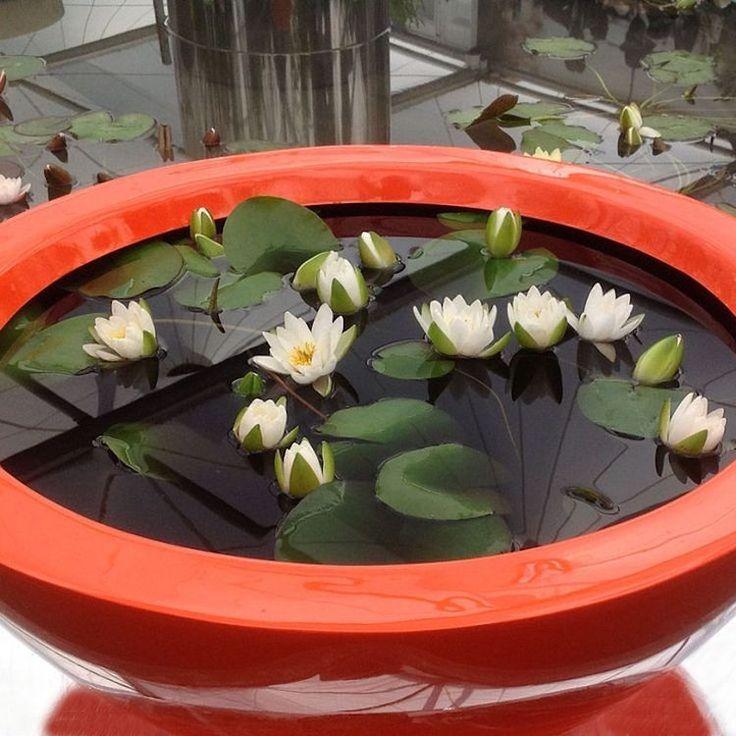 Les 25 meilleures idées concernant bassins de petit jardin sur ...