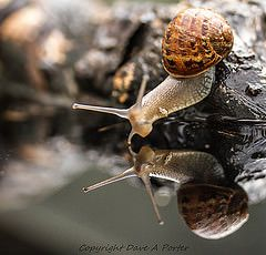 snail testing the water