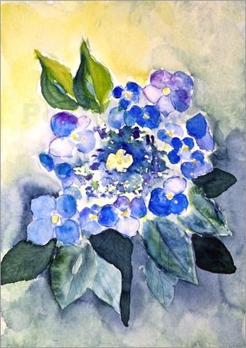 Aquarell einer blauen Hortensienblüte