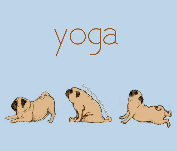 Downward pug pose, cat pose and upward facing pug pose- great stretches!