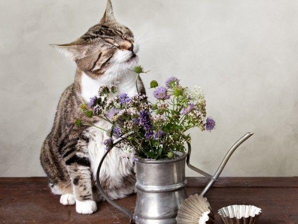 Eine Blume kann durchaus der Auslöser dafür sein, dass eine Katze niest