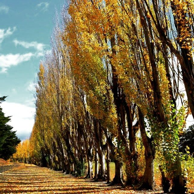 Autumn colours in New Norfolk #Tasmania via