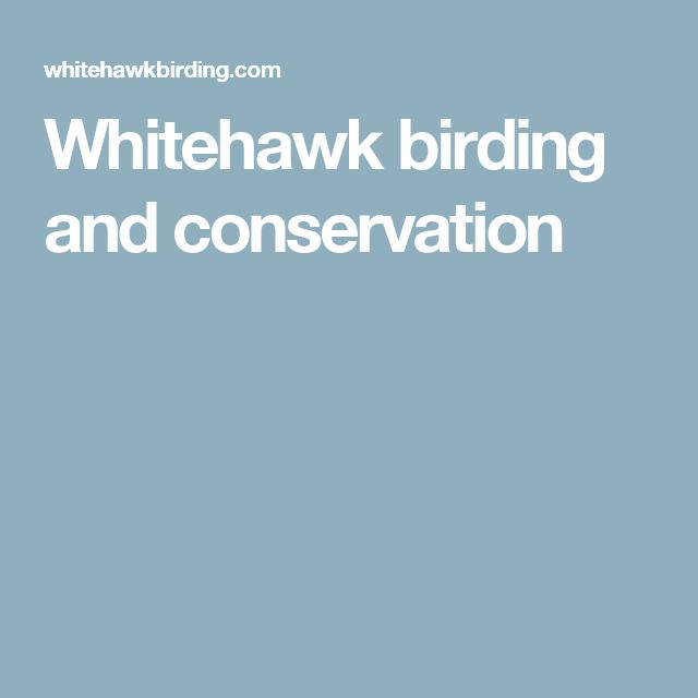 Whitehawk birding and conservation