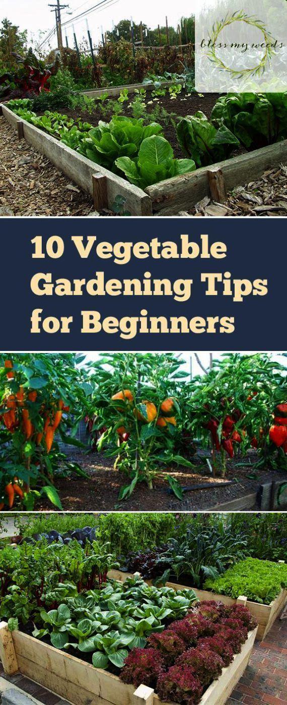 Vegetable Gardening For Beginners Pdf Its Gardening Tools Dhaka