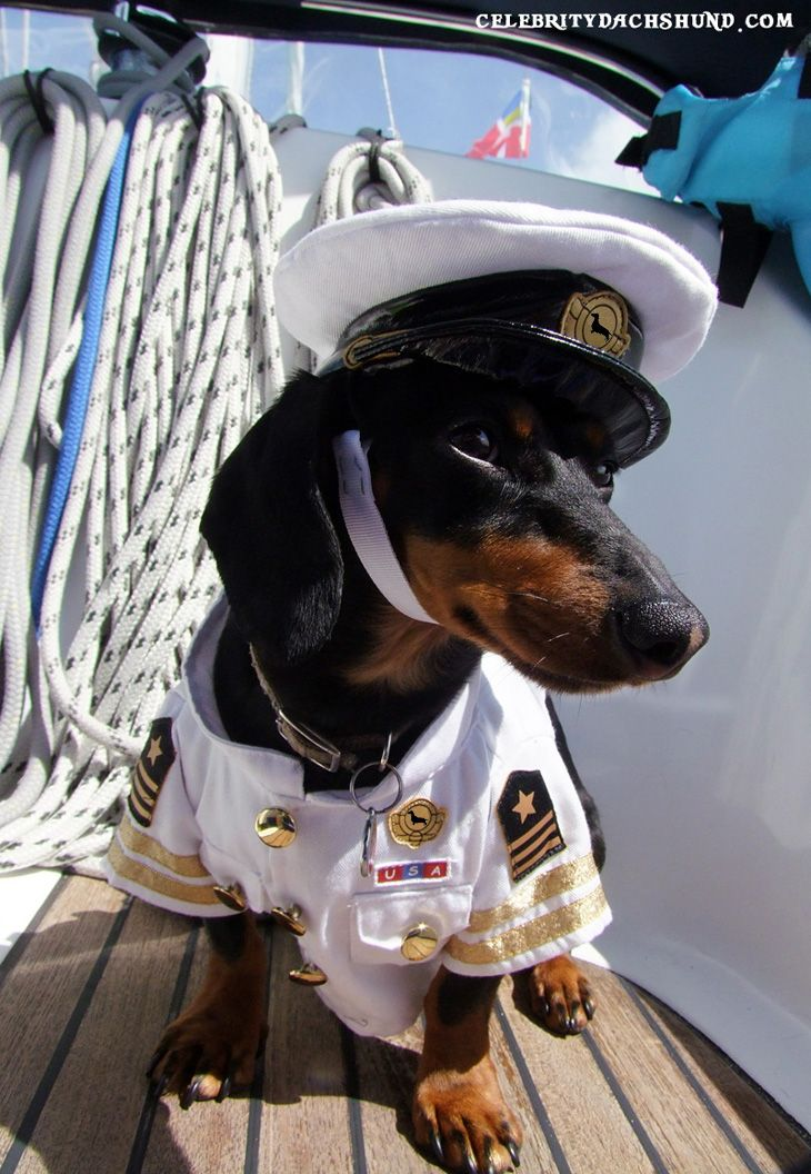 Crusoe the Dachshund's Bahamas Sailing Vacation