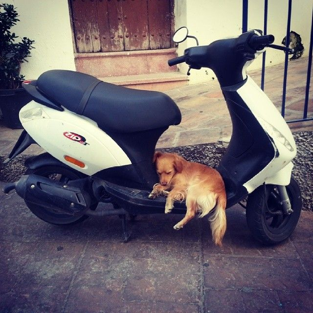 Time to #sleep #dog #scooter #instamood #latergram #torrox #spain #andalucia #tuesday #pictureoftheday