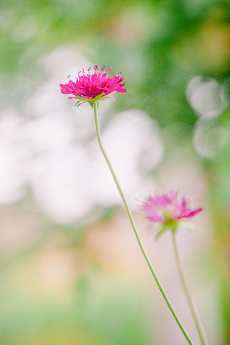Bright Meadow, flower, floral, flowers, bokeh by LauraDiaraNATURE on Etsy