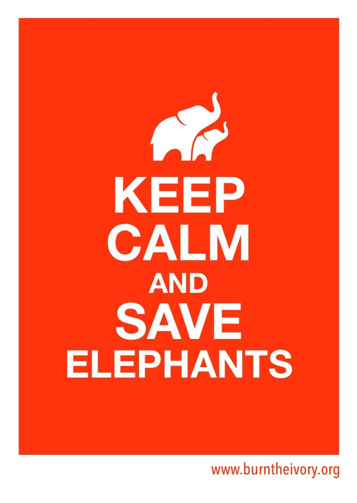 It's World Elephant Day - show your love for ele's! Order a Burn The Ivory - Save The Elephant bracelet today Aug 12th, and get a Keep Calm sticker free! http://burntheivory.org/bracelet/