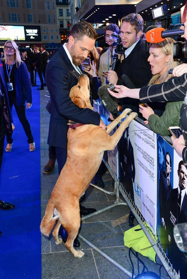 And here he is getting involved with Daddy's press interviews. | Tom Hardy Took His Dog To A Movie Premiere And It's Pretty Hard To Deal With