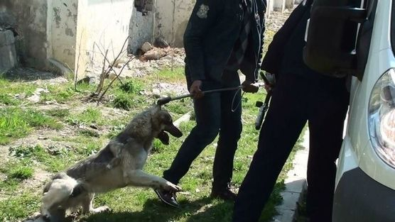 The Romanian Government and the European Parliament: End Romanias Government abuse of public funds - Sign the petition to stop mass killings of stray dogs in Romania