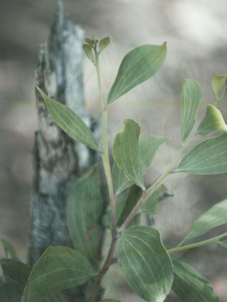 Small Tree Photo Print Card by TreasuresofTerranora on Etsy