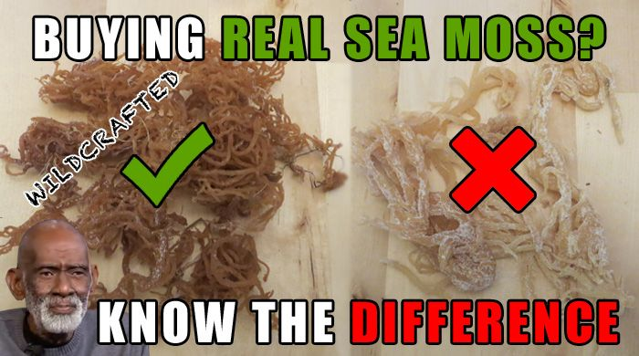 Sea moss is a nutrient dense seaweed and excellent source of minerals including bromine, calcium, iodine, iron, magnesium, phosphorus, potassium, selenium.