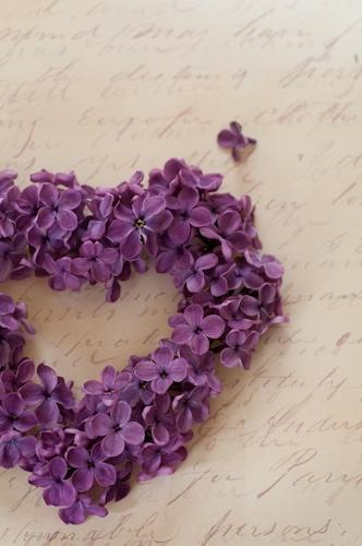 Purple Heart of Lilacs