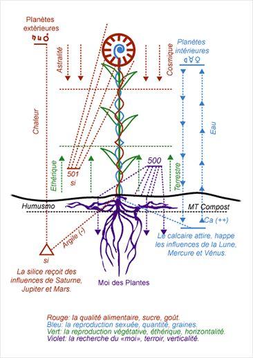 Schéma de la biodynamie