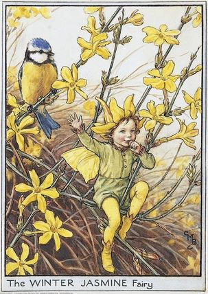 1930s The WINTER JASMINE FAIRY Cicely Mary Barker Print Ideal for Framing