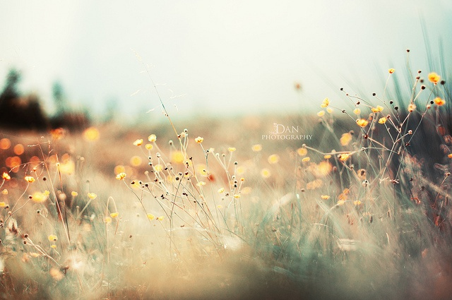 The light, oh the light!: Lavish Natural, Natural Photography, Trav'Lin Lights, Wild Things, D Photo, Art, Create Photo, Creative Photography, Flower