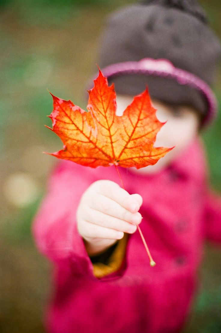 371 best autumn leaves images on pinterest autumn fall fall and