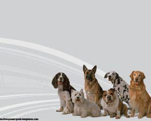 Raza de Perros Powerpoint | Plantillas PowerPoint Gratis …