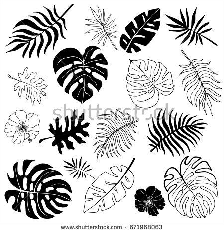 Isolated silhouettes of tropical palm leaves, jung…