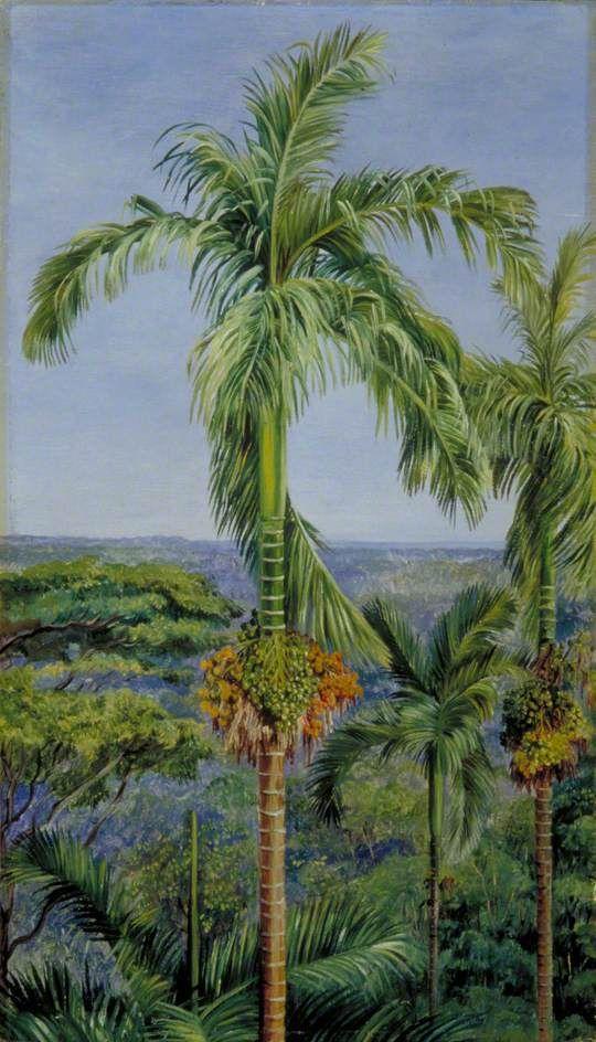 Areca or Betel-Nut Palm, Singapore