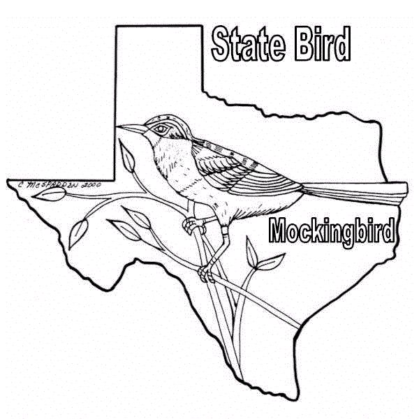 80 best texas coloring book images on pinterest for Coloring pages for texas