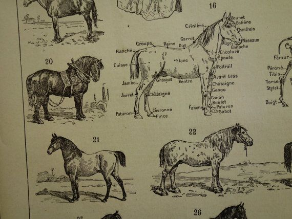 Antique print of horses 1902 old poster with by DecorativePrints