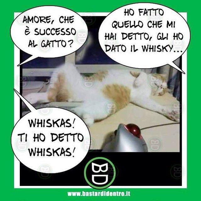 Nooooooo......Che è successo al #gatto ? #bastardidentro #cibo #ipnoticamentebastardidentro www.bastardidentro.it