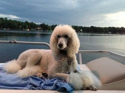 """Beautiful Jill enjoying the lake."""