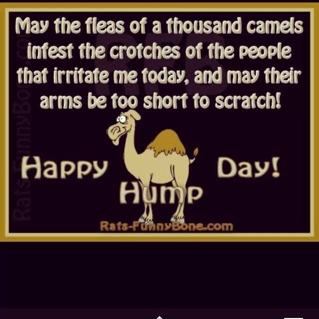 Best Hump Day Quotes: Best 20+ Hump Day Humor Ideas On Pinterest