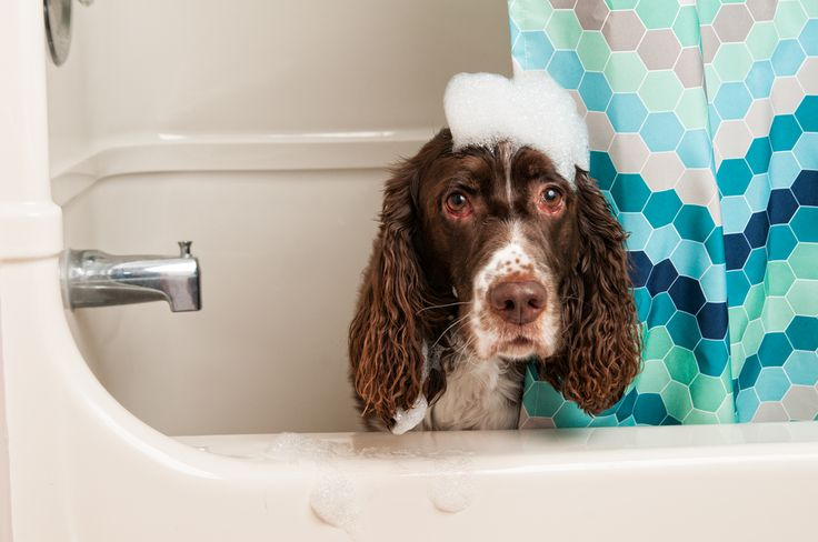49 best pet grooming tips images on pinterest pet grooming your buy dog supplies including dog collars and clippers toys and treats rawhide and dog grooming supplies keep your dog healthy with hartz dog products solutioingenieria Gallery
