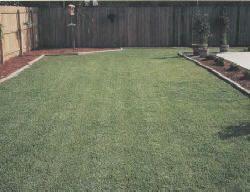 Zenith Zoysia Grass Lawn