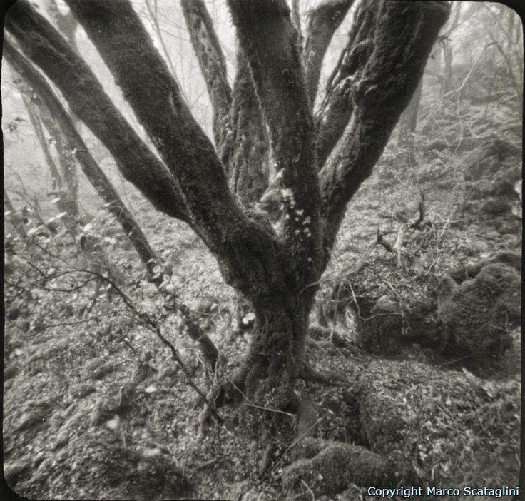 Scopri la Tuscia e la Maremma: Lucus: l'arte di camminare nei boschi della Tuscia...