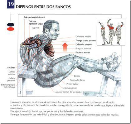 Los 10 mejores ejercicios para triceps claramente explicados, con láminas, videos y una completa explicación sobre como hacer cada uno de los ejercicios de triceps. Ejercicios para triceps hay muchos, pero esta es una selección con 10 de los mejores...