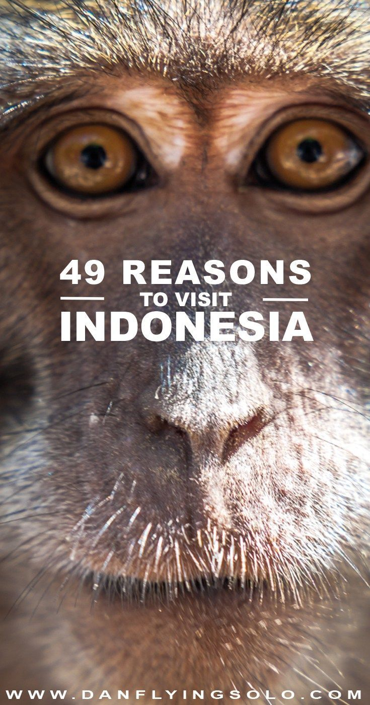 49 Things to do in Indonesia and why you should clear your diary, book a ticket and head for this amazing country | #travel #traveltips #indonesia