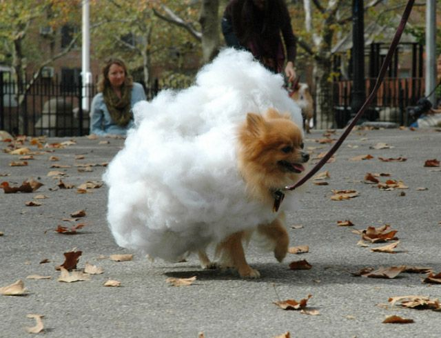 Best 25+ Dogs in costumes ideas only on Pinterest ...