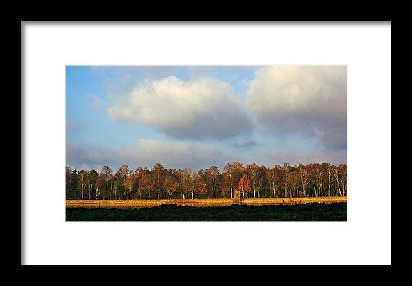 Authumn trees, landscape photo as wall art #netherland #Enschede #landscape #photo #photography #gerhardhoogterp #wallart