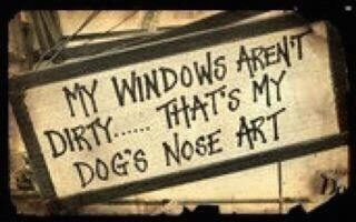 Scotland #Scotland: Nose Art, Dogs, So True, Dog Nose, Animal
