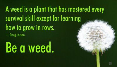 Be a weed!: Sayings, Inspiration, Quotes, Survival Skill, Weed, Wisdom, Thought